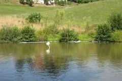 36-Razlitje olja v ribniku v Tekačevem 2_8_2007