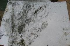 38-Onesnaženje ribnika v Tekačevem 13_8_2007