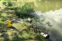 13. junij Onesnaženje ribnika